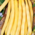 Фасоль спаржевая желтая