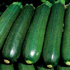 """Кабачок цуккини """"Зеленый"""""""