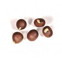 Чекалкин орех рябинолистный