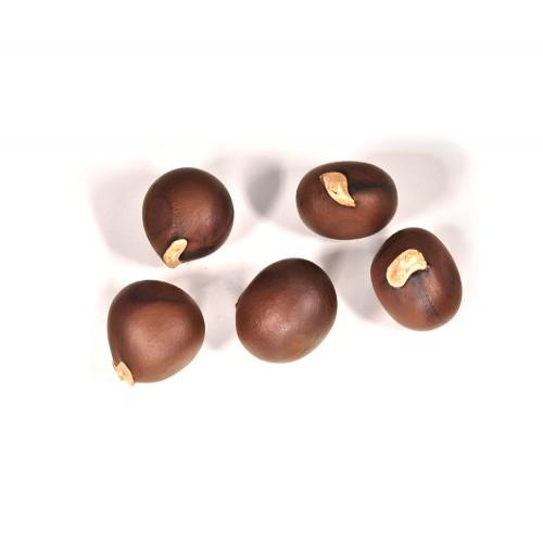 Выращивание чекалкина ореха из семян